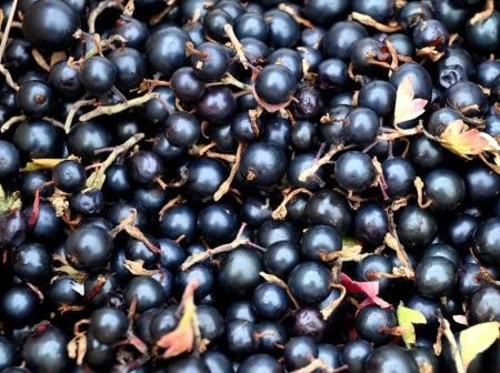 Black currants from Booth Canyon Orchard at Ballard Farmers Market. Copyright Zachary D. Lyons.