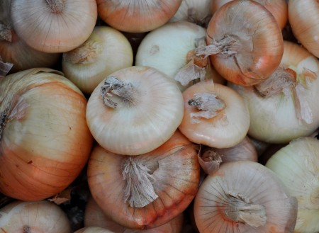 Cipollini onions from Colinwood Farm at Ballard Farmers Market. Copyright Zachary D. Lyons.