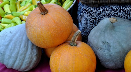 Pie pumpkins and blue hubbard winter squash from Colinwood Farm at Ballard Farmers Market. Copyright Zachary D. Lyons.