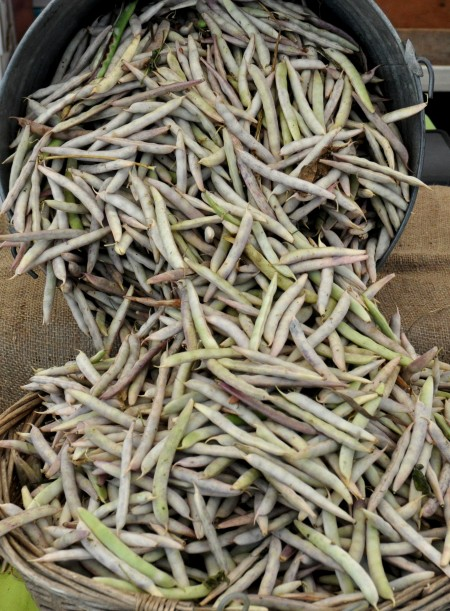 Black turtle shelling beans from Growing Things Farm at Ballard Farmers Market. Copyright Zachary D. Lyons.