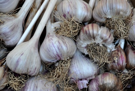 Siberian garlic from Jarvis Family Garlic Farm at Ballard Farmers Market. Copyright Zachary D. Lyons.