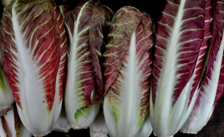 Treviso radicchio from One Leaf Farm at Ballard Farmers Market. Copyright Zachary D. Lyons.