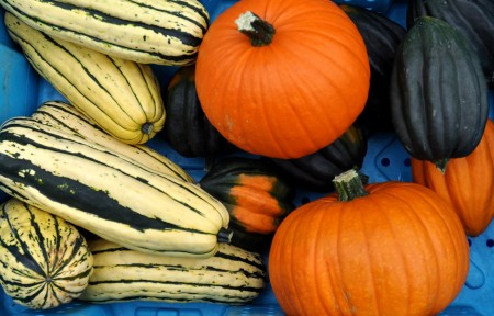 Winter squash from Summer Run at your Ballard Farmers Market. Copyright Zachary D. Lyons.