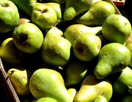 Concorde pears from Tiny's Organic at Ballard Farmers Market. Copyright Zachary D. Lyons.