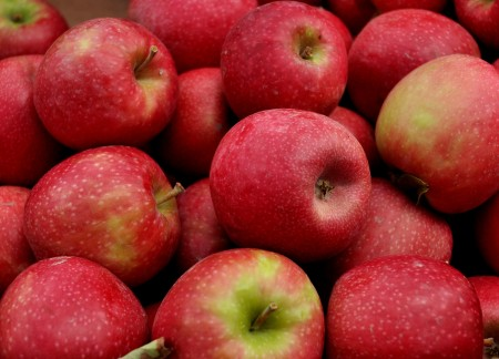 Organic pink lady apples from ACMA Mission Orchards at Ballard Farmers Market. Copyright 2014 by Zachary D. Lyons.