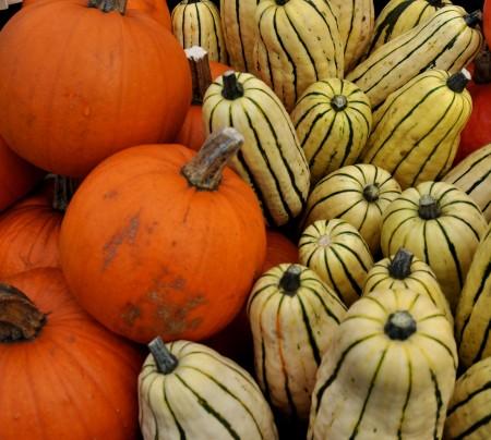 Sugar Pie pumpkins and delicata squash from Kirsop Farm at Ballard Farmers Market. Copyright Zachary D. Lyons.
