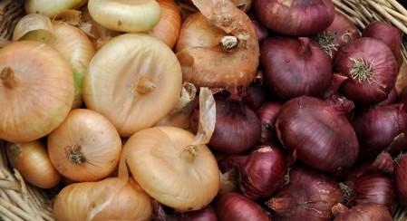 Cipollini onions from One Leaf Farm at Ballard Farmers Market. Copyright Zachary D. Lyons.