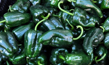Poblano peppers from Stoney Plains Organic Farm at Ballard Farmers Market. Copyright 2014 by Zachary D. Lyons.