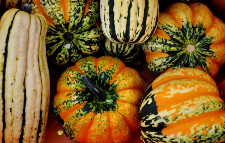 Winter squash from Summer Run Farm at Ballard Farmers Market. Copyright Zachary D. Lyons.