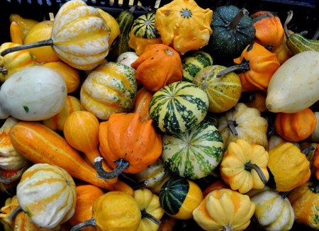 Decorative gourds from Boistfort Valley Farm at Ballard Farmers Market. Copyright Zachary D. Lyons.