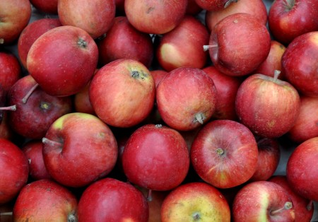 Wickson crabapples from Booth Canyon Orchard Ballard Farmers Market. Copyright Zachary D. Lyons.