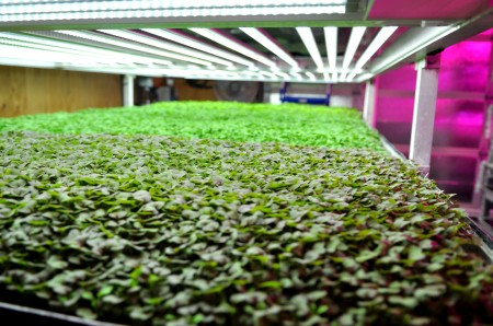 Farmbox Greens' vertical farm in West Seattle. Copyright Zachary D. Lyons.
