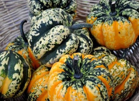 Beautiful carnival winter squash from Growing Things Farm at Ballard Farmers Market. Copyright Zachary D. Lyons.