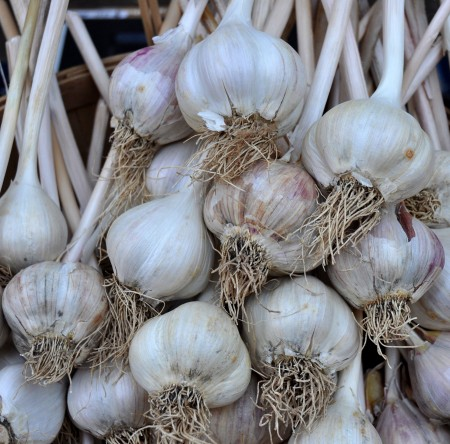 Polish hardness garlic from Jarvis Family Garlic Farm at Ballard Farmers Market. Copyright Zachary D. Lyons.