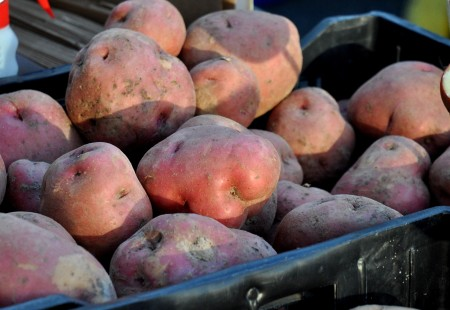 Red Lasoda potatoes from Olsen Farms at Ballard Farmers Market. Copyright Zachary D. Lyons.