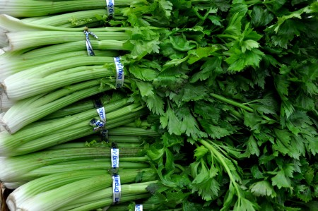Celery from Stoney Plains Organic Farm at Ballard Farmers Market. Copyright Zachary D. Lyons.