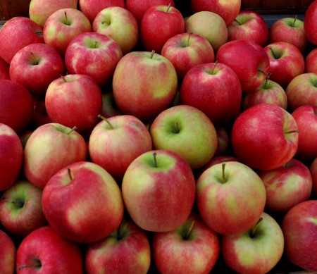Pink Lady apples from Collins Family Orchards at Ballard Farmers Market. Copyright Zachary D. Lyons.
