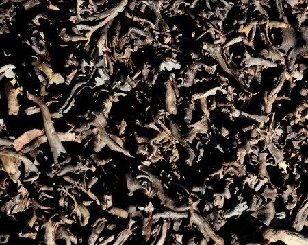 Black trumpet wild mushrooms from Foraged & Found Edibles at Ballard Farmers Market. Copyright Zachary D. Lyons.
