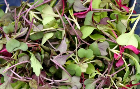 Microgreens from Kirsop Farm at Ballard Farmers Market. Copyright Zachary D. Lyons.